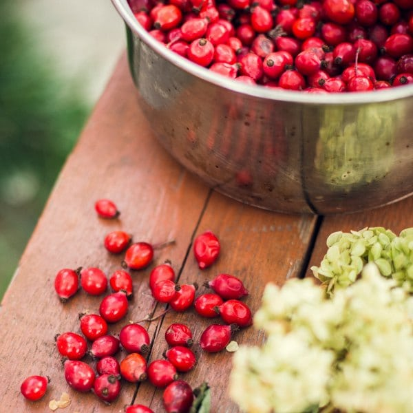Rosehip – an evidence based herbal medicine for inflammation and arthritis