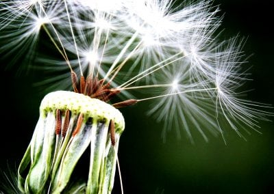Complementary Therapies: Where to from here?